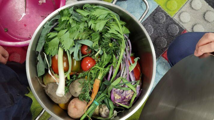 Poznajemy warzywa